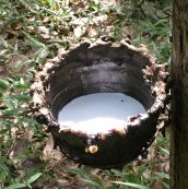 Responsible management of the natural rubber supply chain