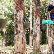 Engaging And Assessing Our Natural Rubber Supply Chain
